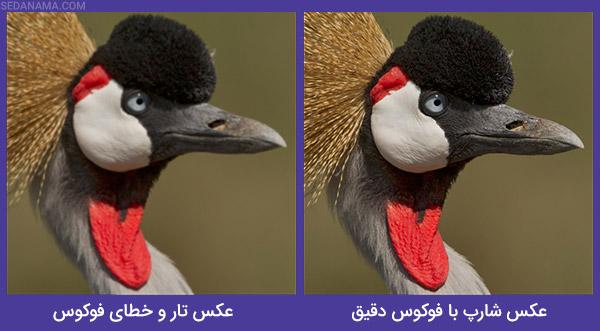مقایسه عکس شارپ و تار