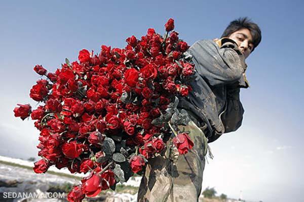 خرید گل برای ولنتاین