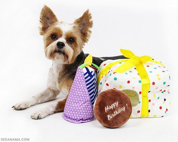 خرید حیوانات خانگی برای کادو تولد